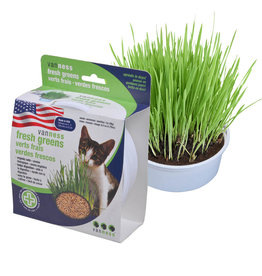 Van Ness Oat Garden Grass Kit / Cat