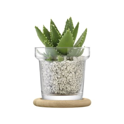LSA Plant Pot With Oak Base Clear 16.5 Cm