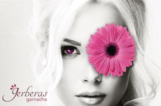 Gerberas, Garnacha Rosé