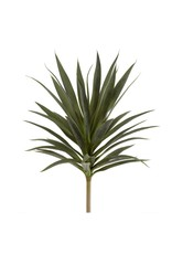 Giant Heneken Succulent