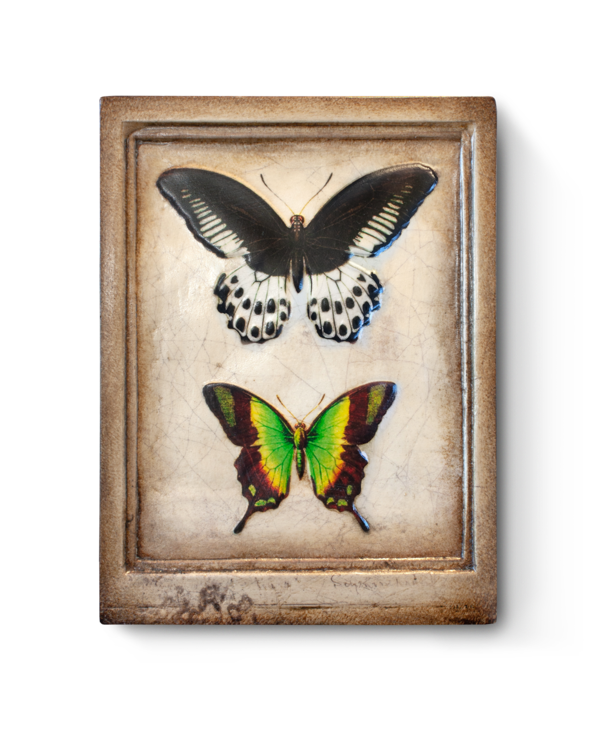RLE1903 Mariposa