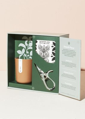 Modern Sprout Harvest Gift Box