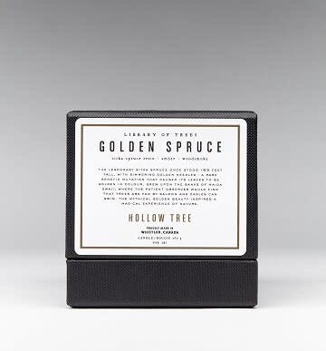 Candle Golden Spruce