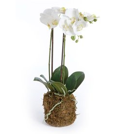 """Napa Home and Garden Phalaenopsis White Orchid Drop-In 23"""""""