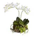 """Napa Home and Garden Mini Dendrobium with Rustic Drop-In 11.5"""""""