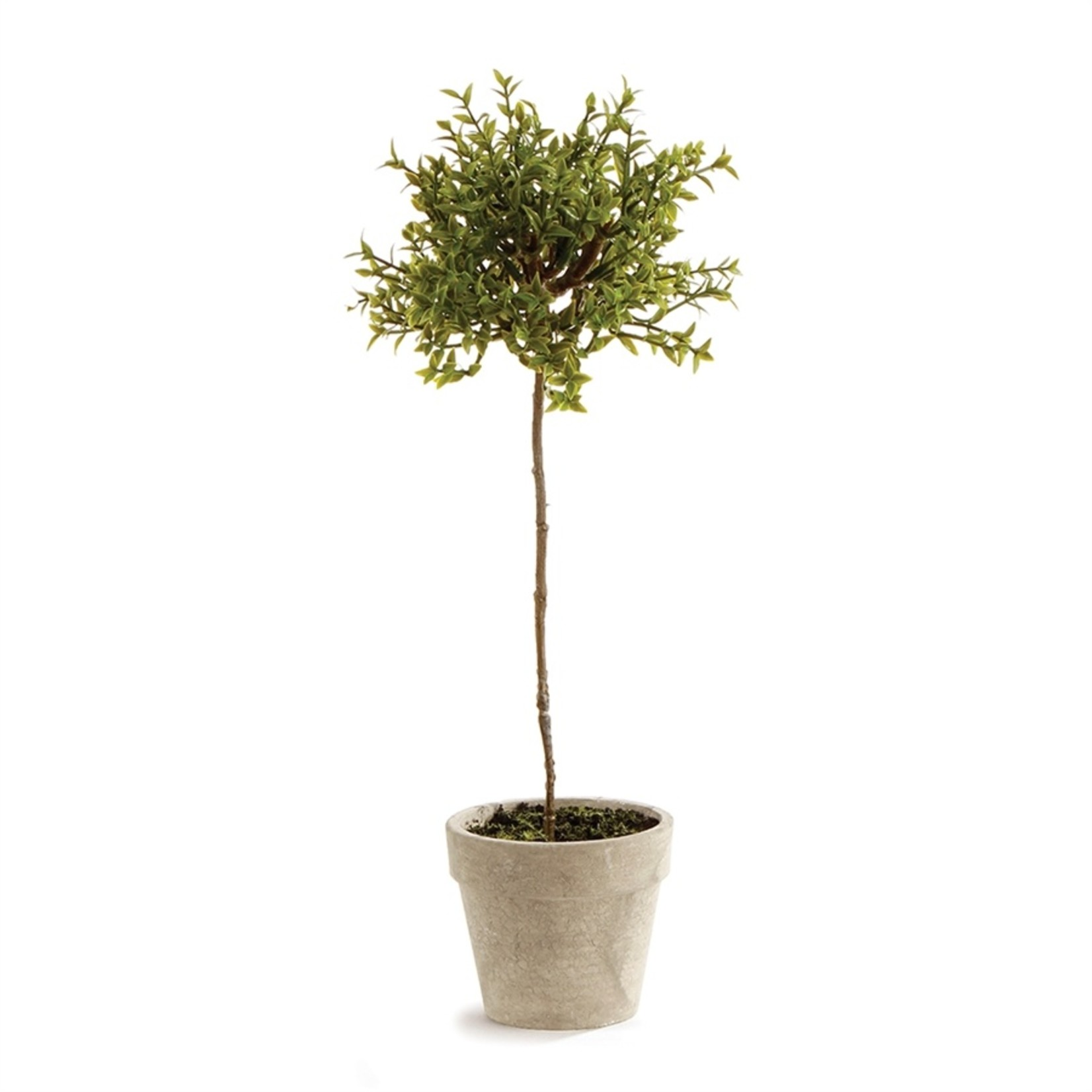 Napa Home and Garden Thyme Topiary