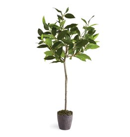 """Napa Home and Garden Bayleaf Tree 28.5"""""""
