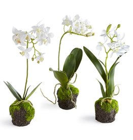 Napa Home and Garden Dendrobium Orchid