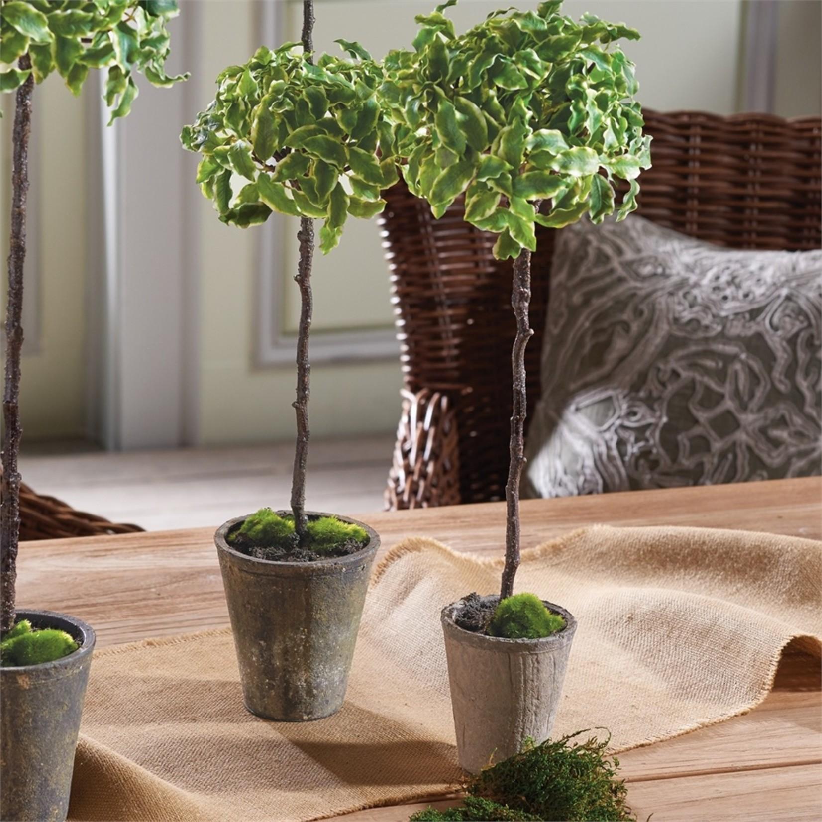 "Napa Home and Garden Euonymus Topiary 23"""