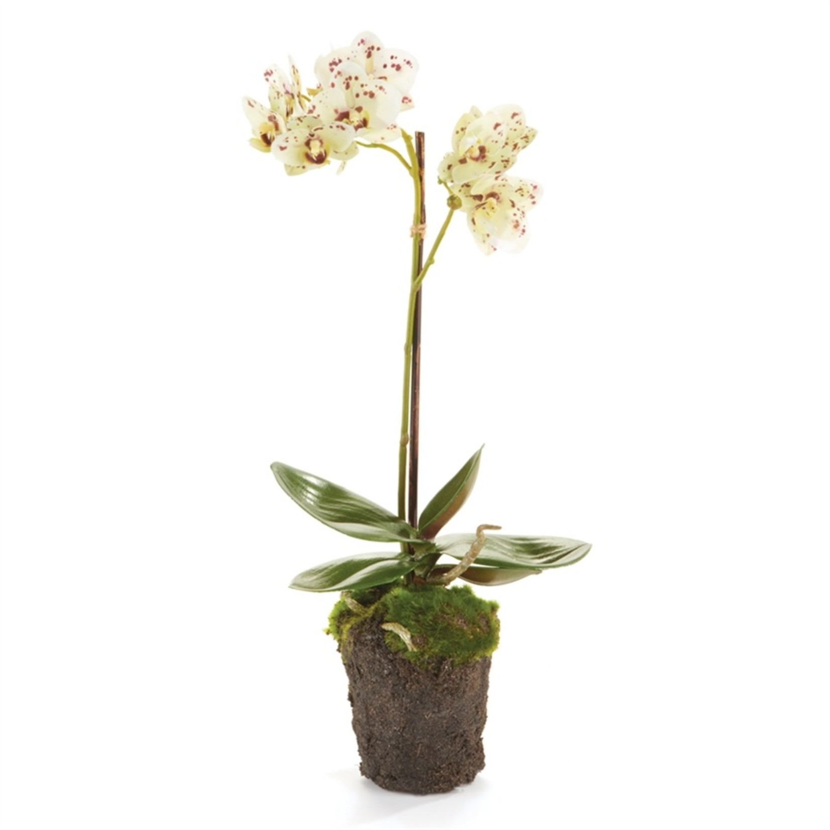 """Napa Home and Garden Phalaenopsis White & Purple Orchid Drop-In - 17"""""""