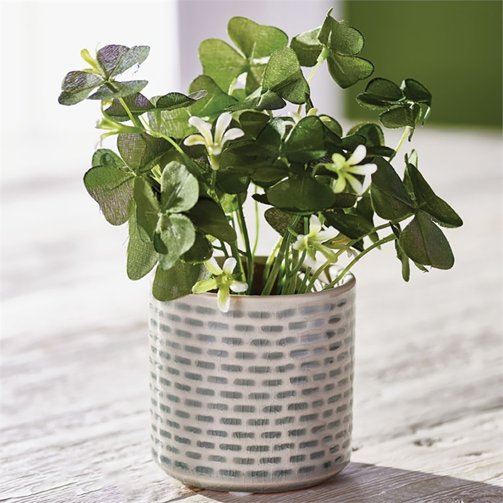 """Napa Home and Garden Potted Clover - 6.5"""""""