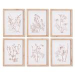 Napa Home and Garden Illustrated Botanicals (Set of 6)