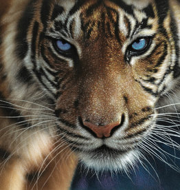 1000pc Blue Eyes Tiger