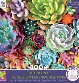 300pc Succulents