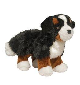 Douglas Stevie Bernese Mountain Dog