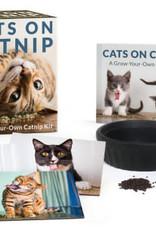 Hachette Mini Kit Cats on Catnip
