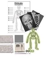 4M 4M Kidzlabs - Glow Human Skeleton