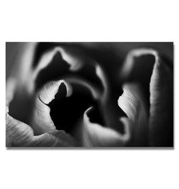 Tulip (B&W)
