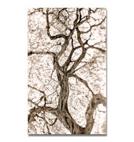 Tree of Life (B&W)
