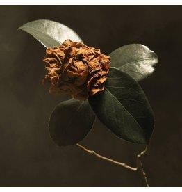 St. Paul and The Broken Bones - Young Sick Camellia