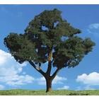 "Woodland Scenics . WOO Cool Shade Trees 2""""- 3"""" (4)"