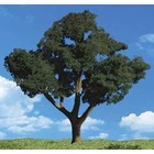 "Woodland Scenics . WOO Cool Shade Trees 3/4""- 1 1/4"""
