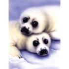Royal (art supplies) . ROY Seals And Pups - Paint By Number