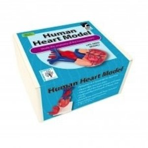 American Educational Products . AEP HUMAN HEART MODEL