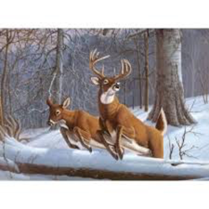 Royal (art supplies) . ROY White Tails Paint By Number