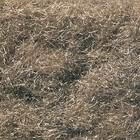 Woodland Scenics . WOO Static Grass Burnt Grass 32Oz