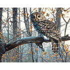 Dimensions . DMS Wise Owl - Paint By Number Art Nature Animals Calgary