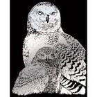 Royal (art supplies) . ROY Engrave Art Silver - Snowy Owl Nature Animals Calgary