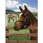 Royal (art supplies) . ROY Equine Paddock Paint by Number