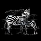 """Royal (art supplies) . ROY Zebras - Silver Foil Engraving Art Kit 8""""X10"""""""