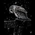 """Royal (art supplies) . ROY Snowfall At Night - Silver Foil Engraving Art Kit 8""""X10"""" Animal Nature Calgary"""
