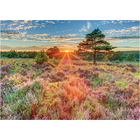 Jumbo Puzzles & Accs . JUM Heather at Sunset 500 pc Puzzle