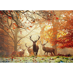 Heye Puzzles. HEY Stags, Magic Forests 1000 pc Puzzle