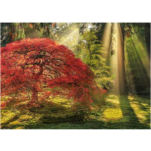 Heye Puzzles. HEY Guiding Light, Magic Forests 1000 pc Puzzle