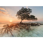 Heye Puzzles. HEY Red Mangrove 1000 pc Puzzle