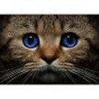 Collection D'Art . CDA Collection D'Art Diamond Embroidery - Blue Eyed Cat