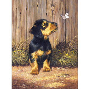 Royal (art supplies) . ROY Daschund Puppy Paint by Number