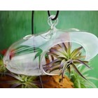 """Midwest Design . MWD (DISC) - Hanging Glass Capsule - 8"""""""
