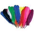 Zucker . ZUC Turkey Quill Feathers 25/Pkg Assorted