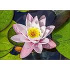Collection D'Art . CDA Diamond Embroidery/Printed/Gem Kit 27X38cm Magic Lotus