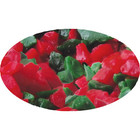 CK Products . CKP Candy Crunch Red/Green Peppermint