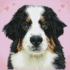 Diamond Dot . DDT Say Hello To Zuzu - Diamond Art Animals Dog Pet Calgary
