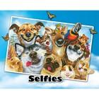 Diamond Dot . DDT Love You - Diamond Art Animals Pets Selfie Calgary