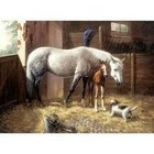 Royal (art supplies) . ROY New Friends Paint By Number Nature Calgary Animals