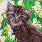 Leisure Arts . LSA Kitten Diamond Art Kit