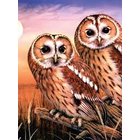Royal (art supplies) . ROY Tawny Owls Paint by Number